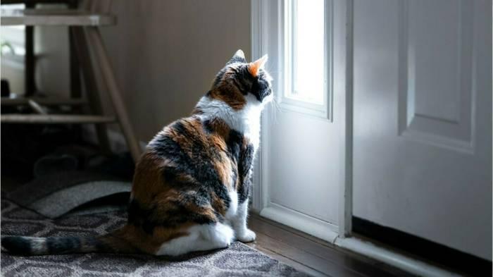 News video: Gefahr für Tiere: Juristen fordern Freigang-Verbot für Hauskatzen