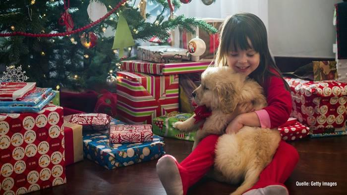 News video: Tiere als Weihnachtsgeschenk? Auf gar keinen Fall!