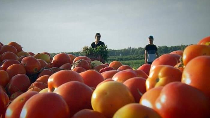 News video: Perfekten Tomaten für die Wüste