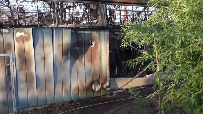 Video: Brand in Zoo Krefeld durch Himmelslaterne? Trauer um getötete Affen