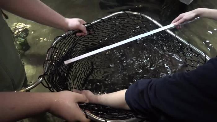 News video: Fische zählen am Timmendorfer Strand: Inventur im «Sea Life»