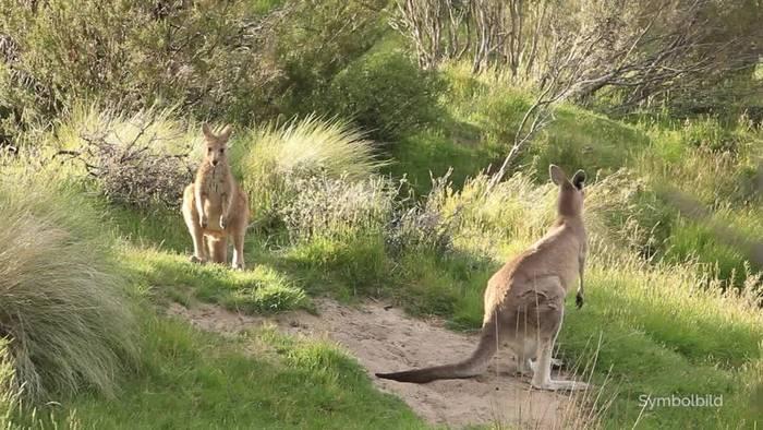 Video: Experte: Brände in Australien töteten eine Milliarde Tiere