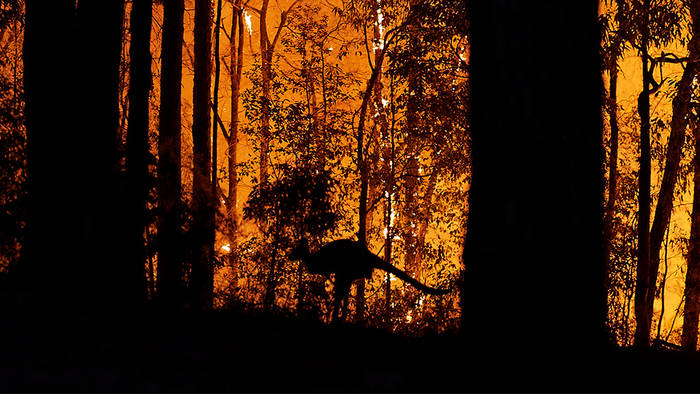 Video: Ökologe warnt: Zahl der toten Tiere in Australien sei bedeutend höher als bisher geschätzt