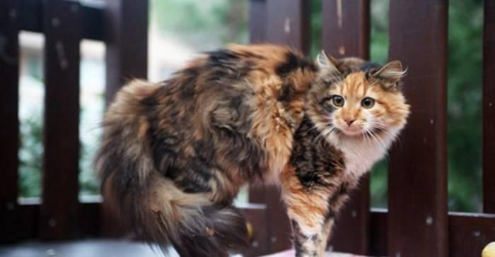 News video: Die Körpersprache deiner Katze schnell erklärt