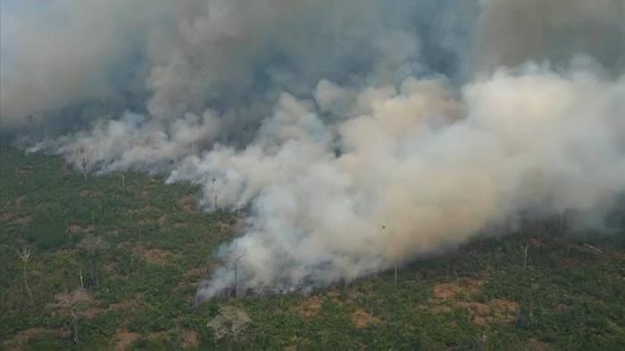 Video: Trauriger Rekord: Amazonas-Regenwald schrumpft immer schneller