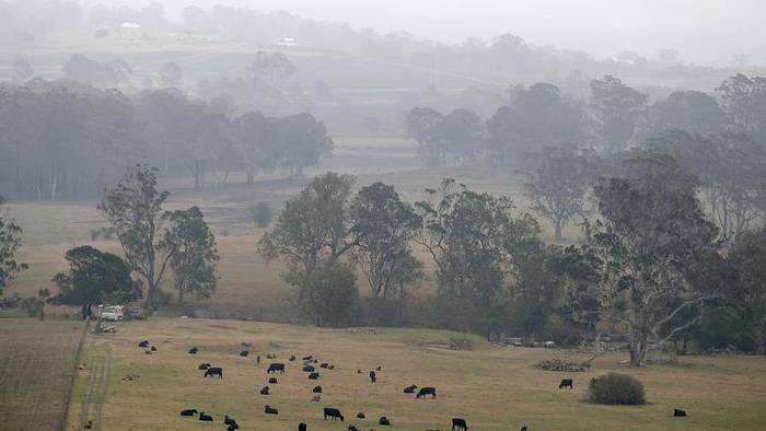 News video: Buschfeuer in Australien: Linderung durch Regen