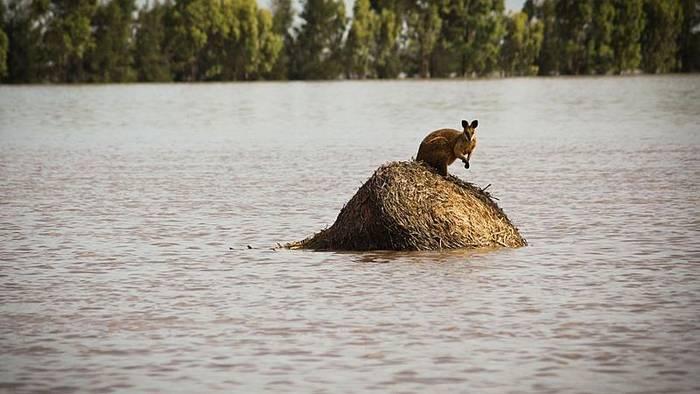 Video: Feuer und Überschwemmungen in Australien