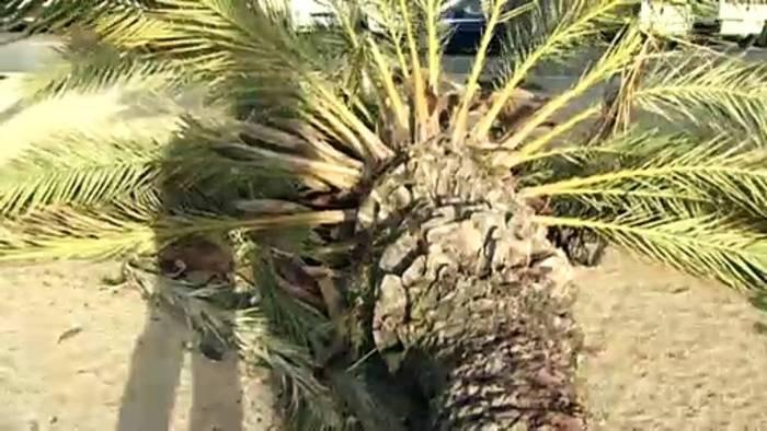 News video: Sturm und Schnee in Spanien: Unwetter fordert drei Tote