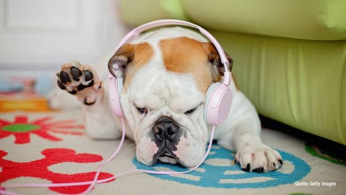 News video: Playlisten für Haustiere bei Spotify