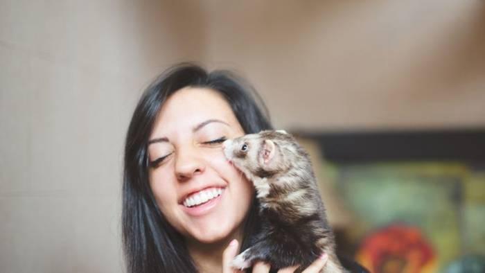 News video: Ungewöhnliche Haustiere: Das Frettchen - Verspielt wie ein Hund, sauber wie eine Katze