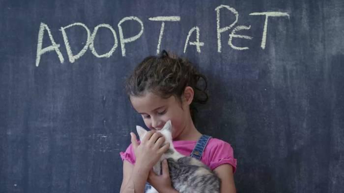 News video: Tierheim sucht ein Zuhause für