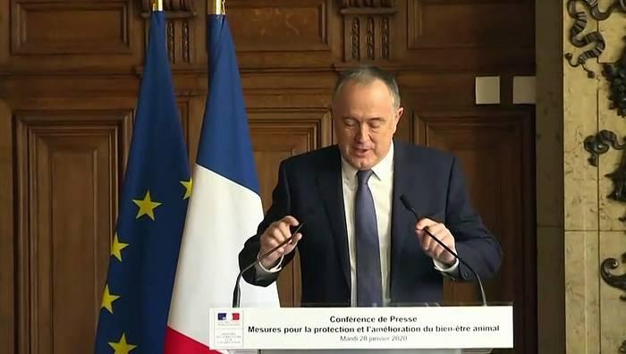 News video: Frankreich verbietet Kükentöten ab 2021