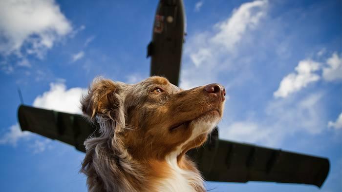 News video: Hund im Flugzeug: Jetzt soll das Tier Entschädigung erhalten!