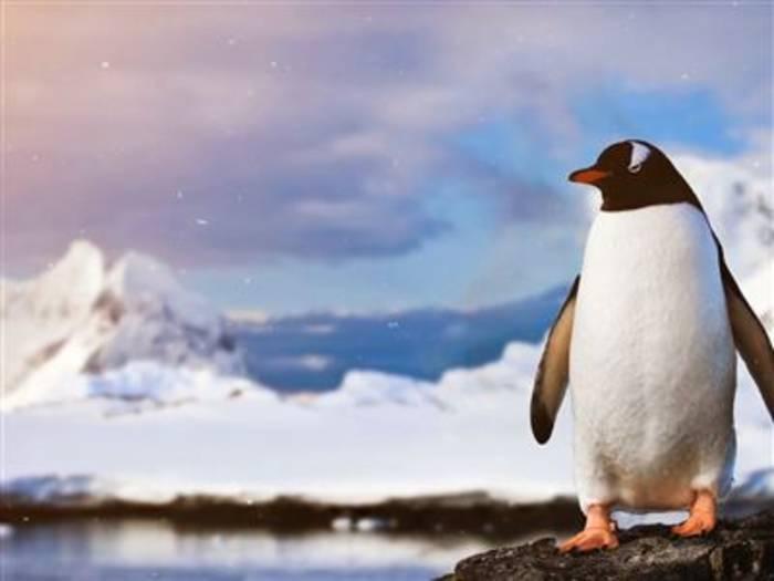 News video: Warum uns die Erwärmung der Antarktis alle angeht