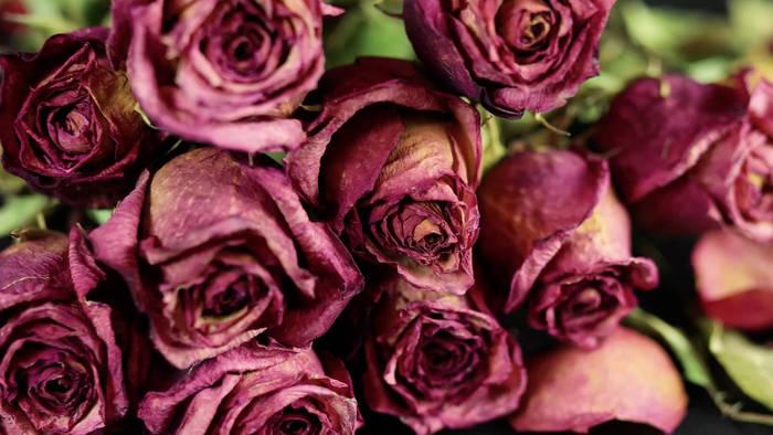 News video: Verwelkte Blumen vom Valentinstag übrig? Hier sind 3 Tipps zum wiederverwerten!