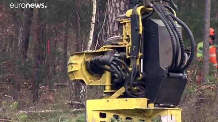 News video: Gericht erlaubt Waldrodung für deutsches Tesla-Werk