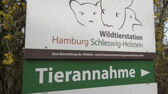 News video: Die Hasen-Retter in Norddeutschland