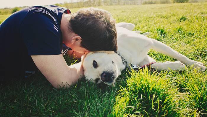 News video: Diese kleinen Tiere gefährden im Frühling ernsthaft die Gesundheit eurer Hunde