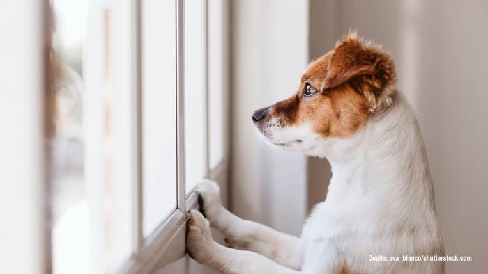 News video: Gassi gehen während Corona: Das müsst ihr mit eurem Hund beachten