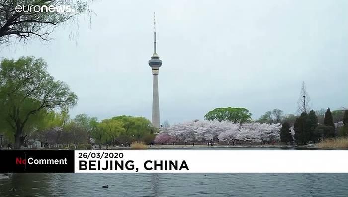 Video: Stark begrenztes Vergnügen: Kirschblüte in Peking
