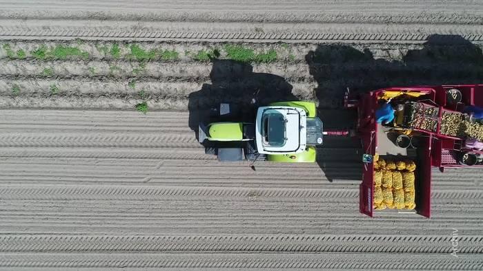 News video: Landwirten fehlen Arbeiter: Hilferuf an Merkel