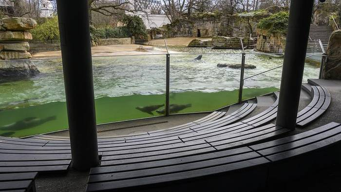 News video: Zoos geschlossen, Tiere depressiv - es fehlt an Geld und Abwechslung