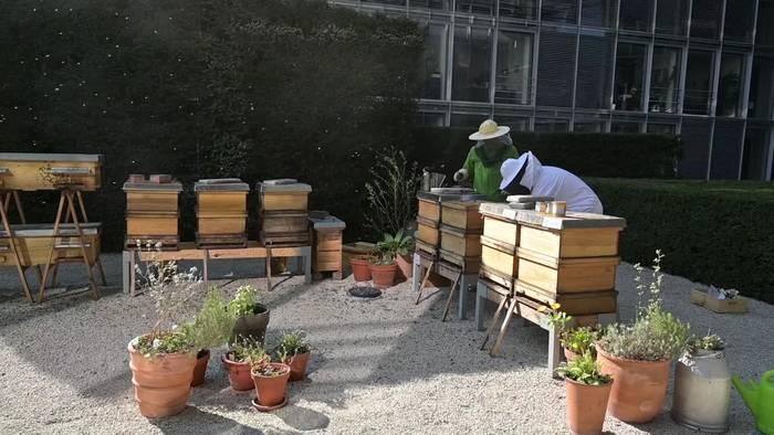 Video: Fleißige Bienen: Es gibt noch Normalbetrieb im Bundestag