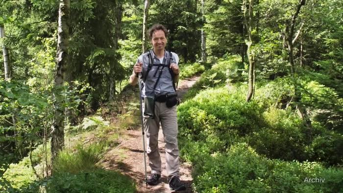 Video: Spaziergangsforscher freut sich über coronabedingten Trend