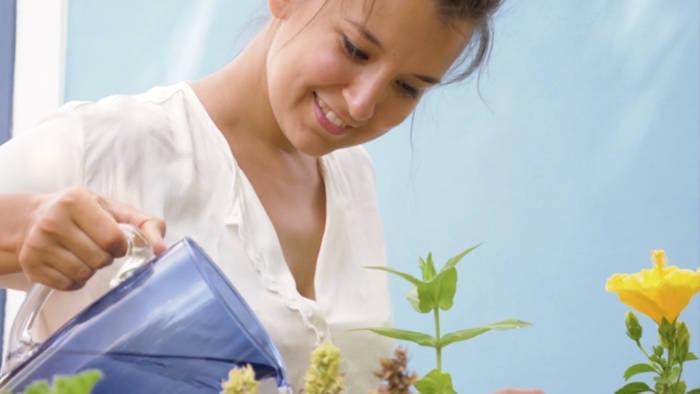 Video: Diese 5 Gemüsesorten kannst du ganz einfach zuhause anpflanzen