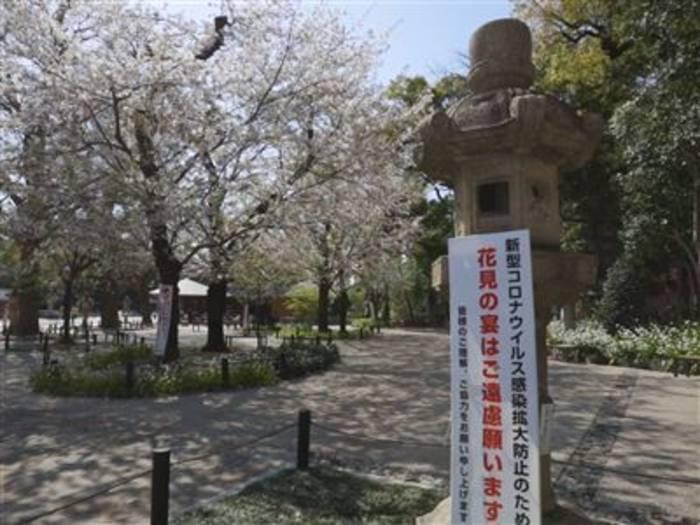 Video: Leider ist Sakura-Saison in Japan dieses Jahr abgesagt