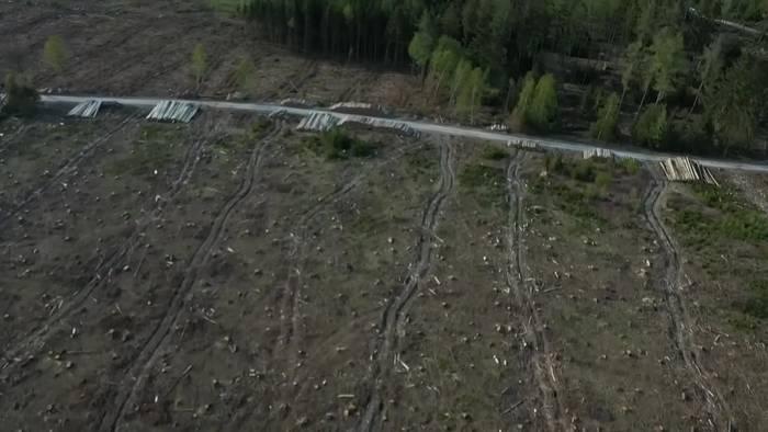 News video: Kahlschlag soll Borkenkäfer im Taunus bremsen