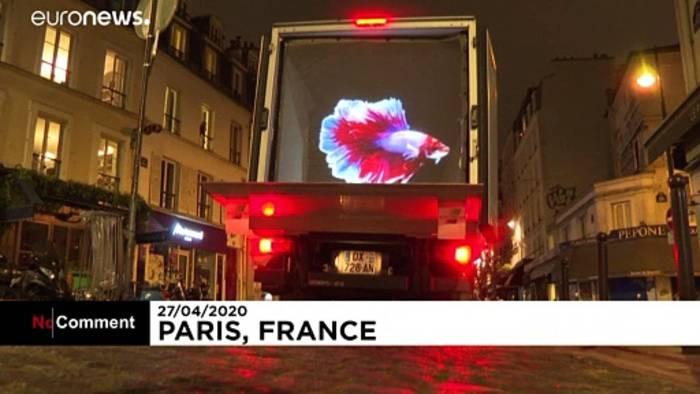 Video: Tier-Hologramme muntern Menschen auf - in der Ausgangssperre in Paris