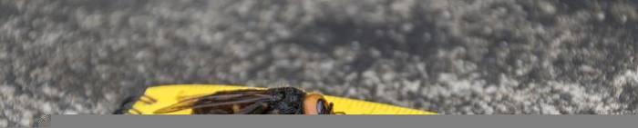 Video: Riesenhornissen gesichtet: US-Imker bangen um ihre Bienen