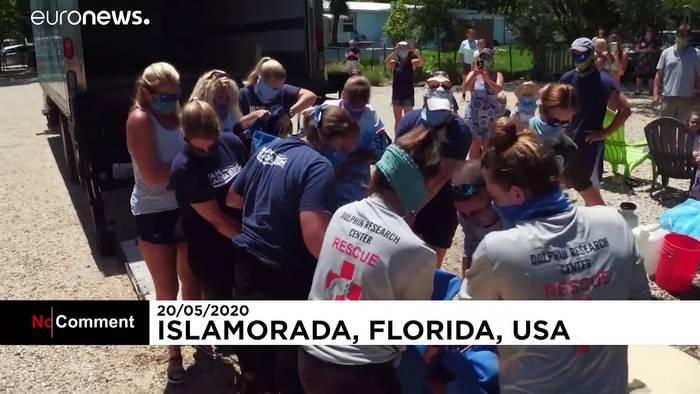 News video: Florida: Zwei Rundschwanzseekühe in Freiheit entlassen