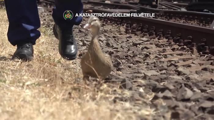 Video: Auf Bahngleisen: Entenküken-Rettung durch die Feuerwehr!