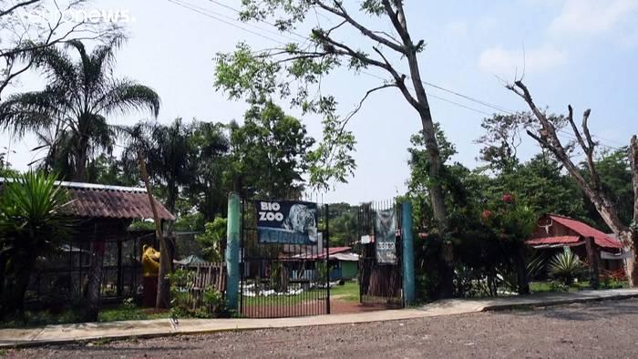 News video: Pumas mit Namen Pandemie und Quarantäne in Mexiko geboren