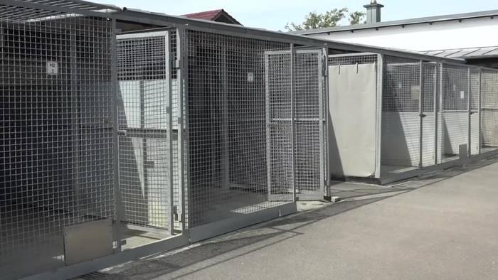 News video: Hohe Nachfrage nach Hund, Katze und Kaninchen in Tierheimen