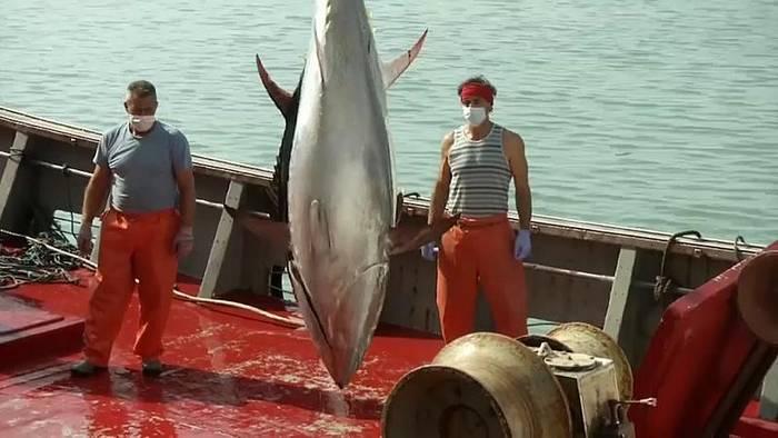 Video: Restaurants zu, keine hungrigen Touristen - wie Covid-19 der Thunfischsaison in Spanien zusetzt