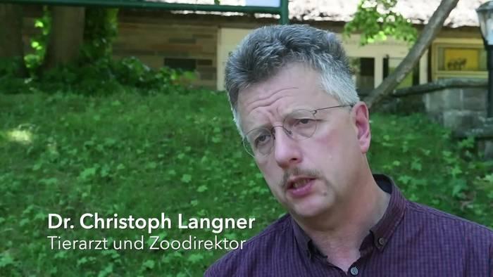 News video: Gesundheitscheck im Zoo: Polarwolf-Nachwuchs in Top-Zustand