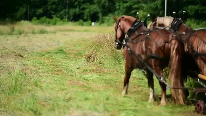 Video: Lüneburg: Pferde im Umwelteinsatz auf waldfreien Flächen