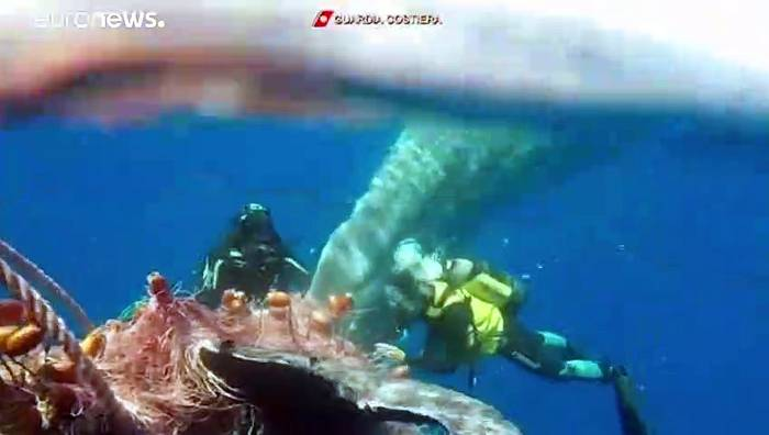 Video: Taucher befreien Pottwal aus Fischernetz