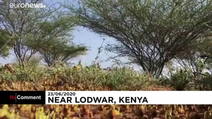News video: Viele Länder Afrikas erleben die schlimmste Heuschreckenplage seit Jahrzehnten