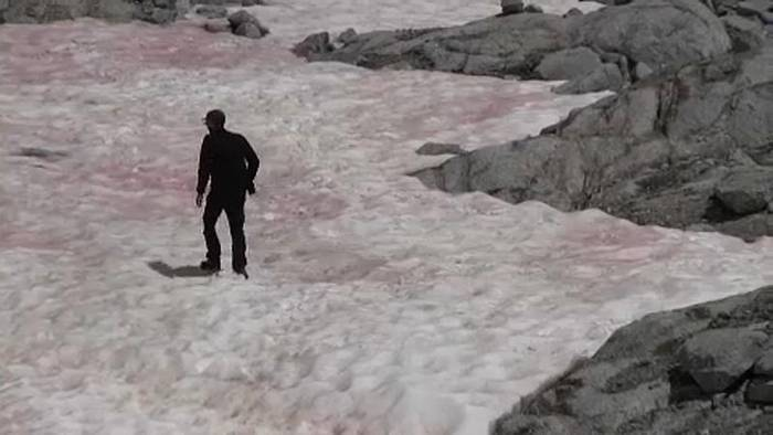 News video: Werden Gletscher zu rosa Riesen? Italien staunt über Algenart