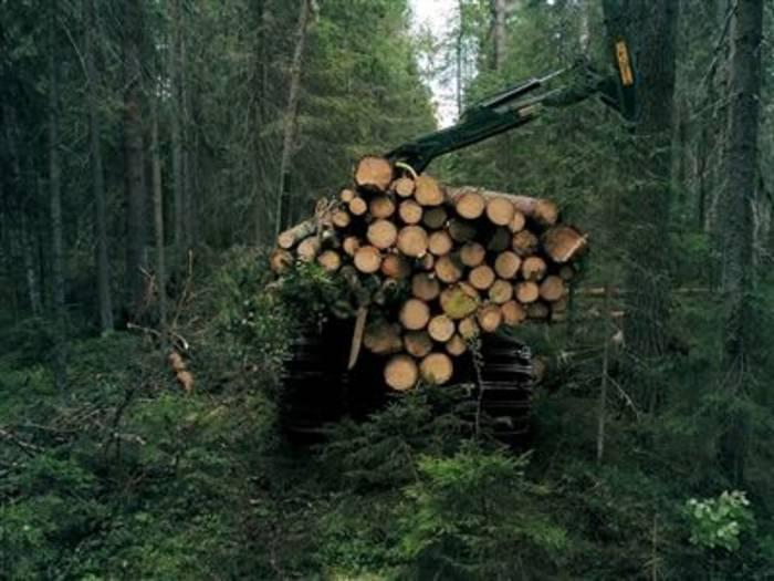 News video: Europa verliert Waldbiomasse