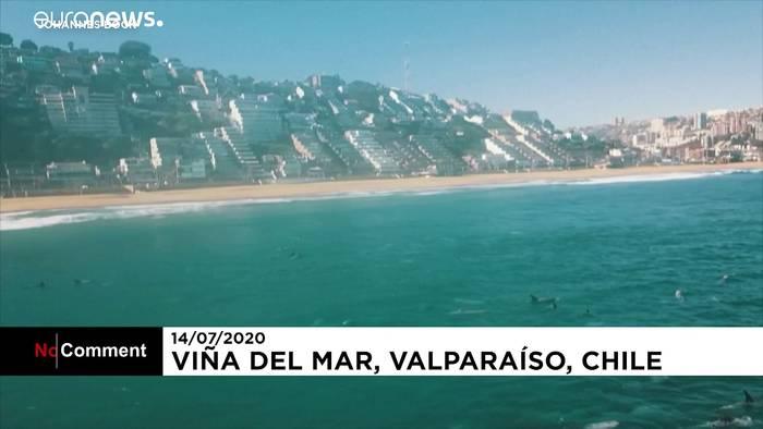 Video: Etwa 100 Delfine am Strand von Valparaiso