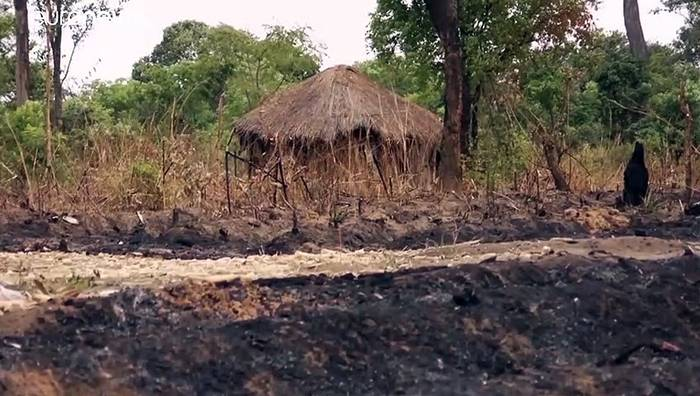 News video: Afrika und Südamerika sind Spitzenreiter bei der Abholzung der Wälder