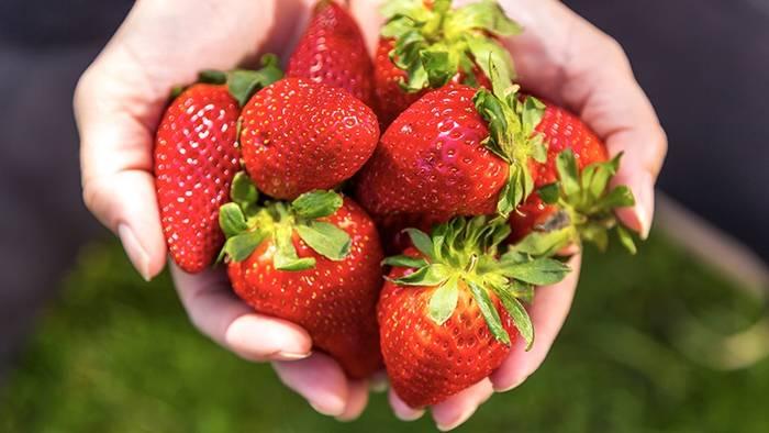 News video: Erdbeeren aus bestimmtem EU-Land können der Gesundheit schaden