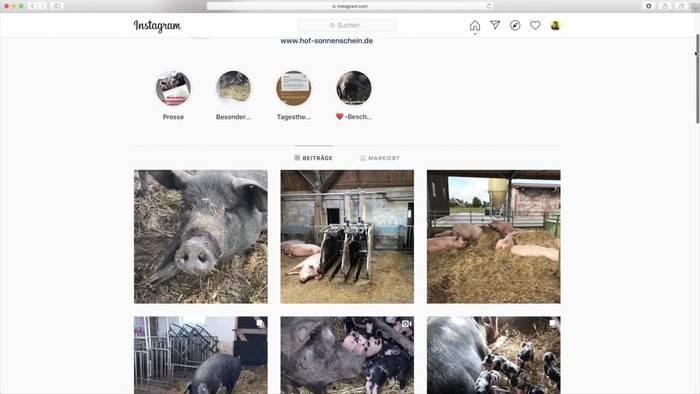 News video: Schwein Bobby darf leben - Und ist nun Influencer