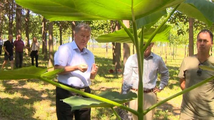 News video: [CDATA[Erste Kohlenstoff-Farm: Kann der Smaragdbaum das Klima retten?]]