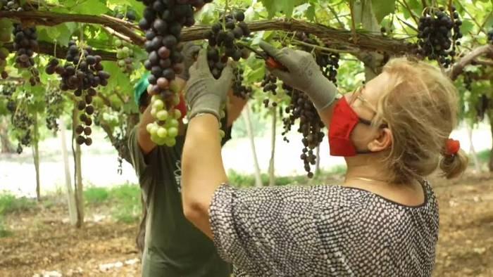 News video: Süditalien: Obst ohne Ausbeutung